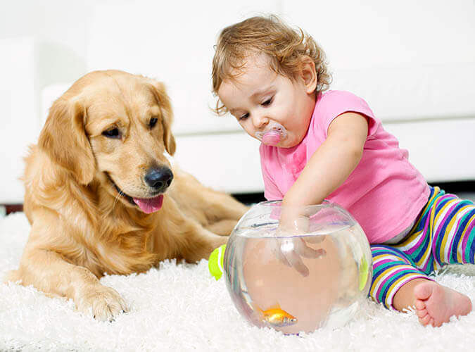 family and pet friendly green cleaning