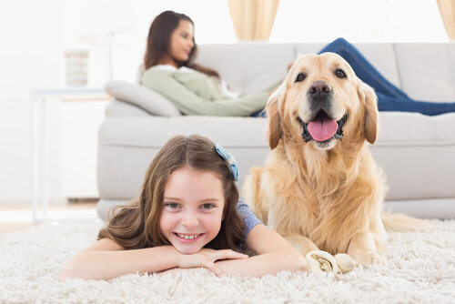 pet odor removal cleaning Tulsa