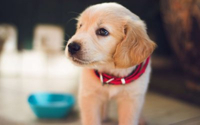 What to Do When Your Dog has an Accident in the House